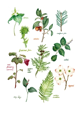 Native BC Botanicals